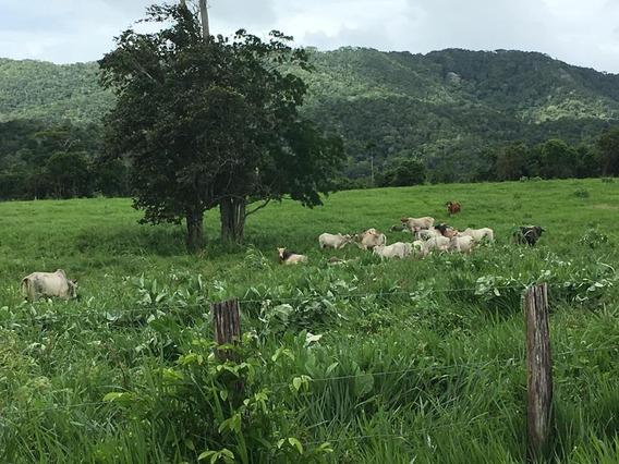 Finca Hacienda En Venta En Aroa Yaracuy #21-3579
