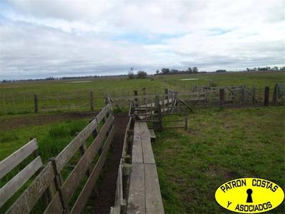 275 Ha - Navarro En R47 - (agricolas)