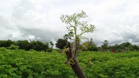 Fazenda Piauí, Plana, Toda Cercada, No Asfalto