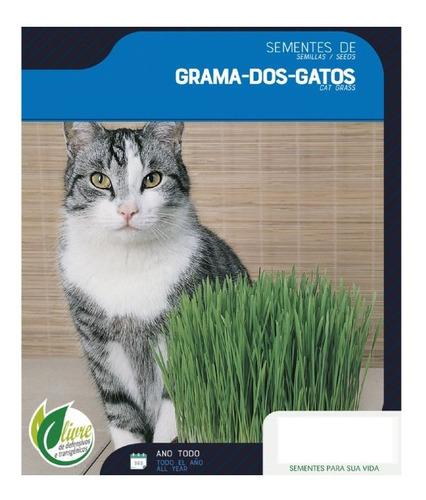 Grama Dos Gatos A Verdadeira 4500 Sementes Para Plantio +nf