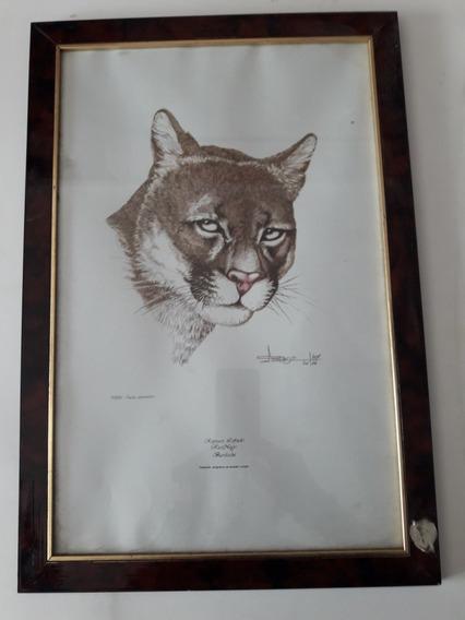 Cuadro, Puma, Osbaldo Lofredo ( Serigrafía Impresa)
