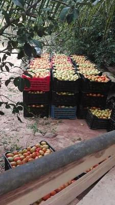 Vendo Finca Productiva En El Zulia