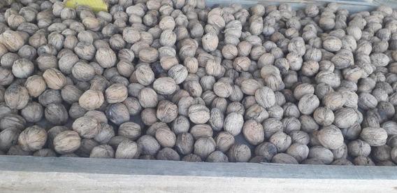 Vendo Fincas Con Nogales San Rafael Mendoza
