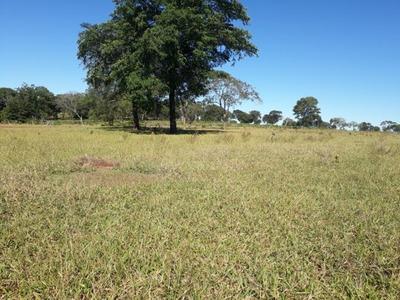Fazenda A Venda Em Ribas Do Rio Pardo - Ms (pecuária) - 854