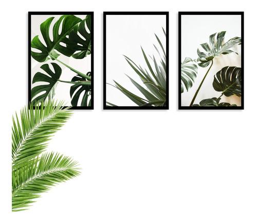 Kit 3 Quadros Decorativos Folhagem Nova Costela De Adão Sala