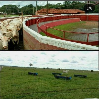 Fazenda A Venda Em Três Lagoas - Ms (pecuária) - 1110