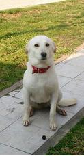 Cachorra En Adopción