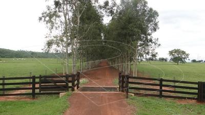Fazenda Para Venda : Ref:040190.03 - 040190.03