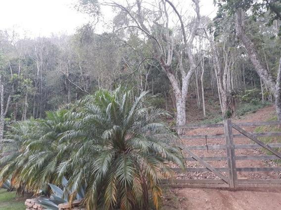Terrenos A Venda, Loteamento Vale Das Videiras. - 11250