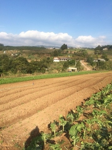 Rural Para Venda, 0 Dormitórios, Nova Biritiba - Biritiba-mirim - 3124