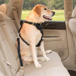 Cinturon De Seguridad Para Mascotas Reglamentario Ever Safe
