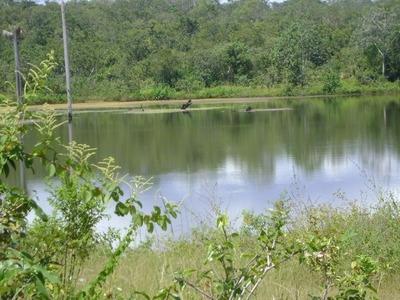 Fazenda Em Crixás / Dueré - To, P/ Pecuária - 439