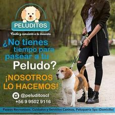 Paseador De Perros. Peluqueria Canina. Paseo De Perros