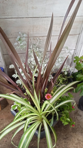 Imagen 1 de 7 de Plantas Decoración, Exterior E Interior!