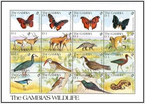 Dams Gâmbia Fauna Africana Animais Selvagens Savana 1