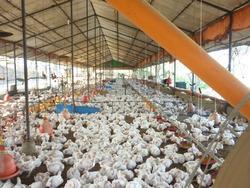 Venta Amplia Finca En Tinaquillo Para 75500 Aves,rb313959