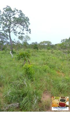Fazenda Em Barra Do Corda - Ma, 1.353 Hectares - 151