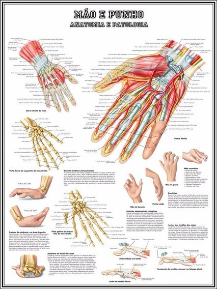 Mapa Mão E Punho Anatomia 65x100cm Medicina Poster S/ Dobras