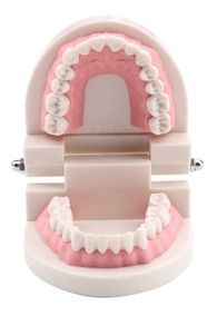 Arcada Dentária Manequim Odontologia C/ Dentes Fixos Ref246