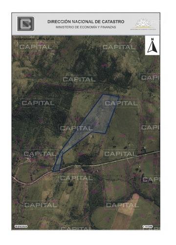 Campo De 39 Hectareas En Venta En Aiguá- Ref: 29901