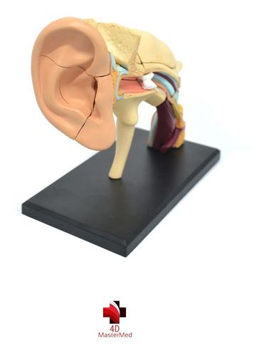 Modelo Corpo Humano - Orelha - 4d Master