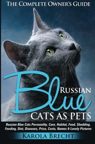 Gatos Azules Rusos Como Mascotas Cuidado De La Personalidad
