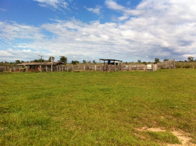 Fazenda A Venda Em Terenos - Ms (pecuária) - 926