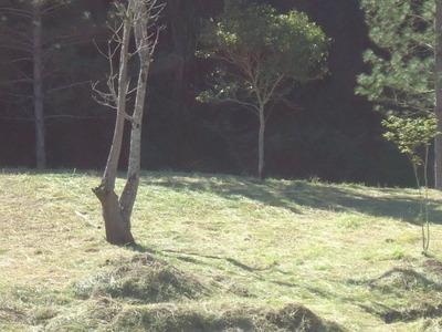 Lindo Terreno Pronto Para Construir Com Poço E Riacho