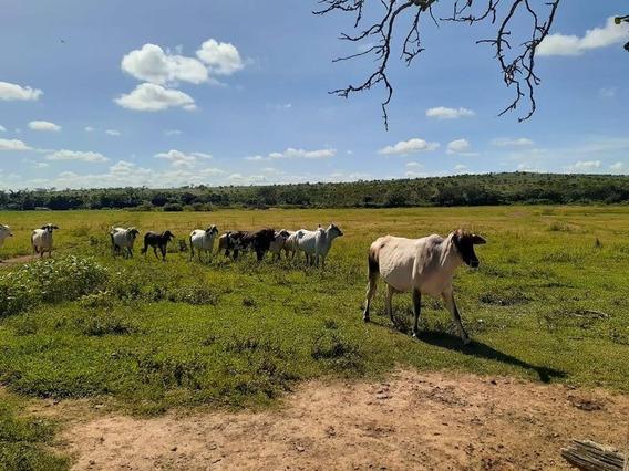 Fazenda Com 4 Quartos Para Comprar No Zona Rural Em Felixlândia/mg - 2148