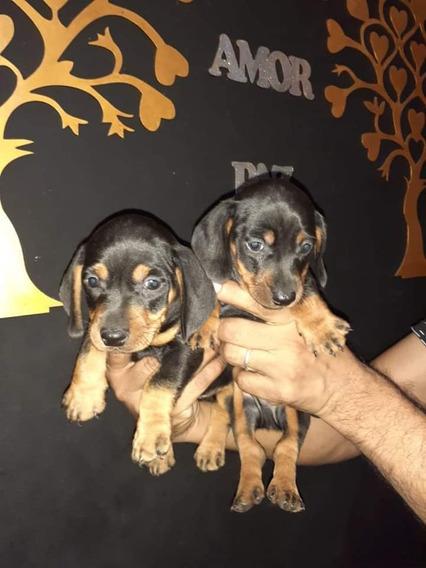 Salchichas Cachorros