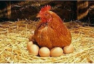 Huevos De Campo Organicos