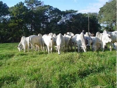 Fazenda Em Araguaçu To, P/ Pecuária - 13