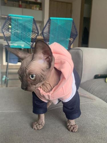 Ropa Para Mascotas, Buzo Para Perro O Gato