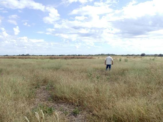 Fazenda Para Locação Em Peixe, (zona Leste) - 2000/2865_1-1456531
