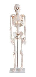 Esqueleto Humano De 85 Cm Com Haste E Suporte Anatomia