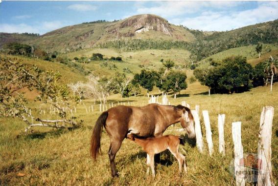 Fazenda Localizado(a) No Bairro Zona Rural Em Castro Alves / Castro Alves - 4570