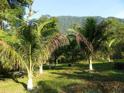Sitio Em Angra Dos Reis - Ariro