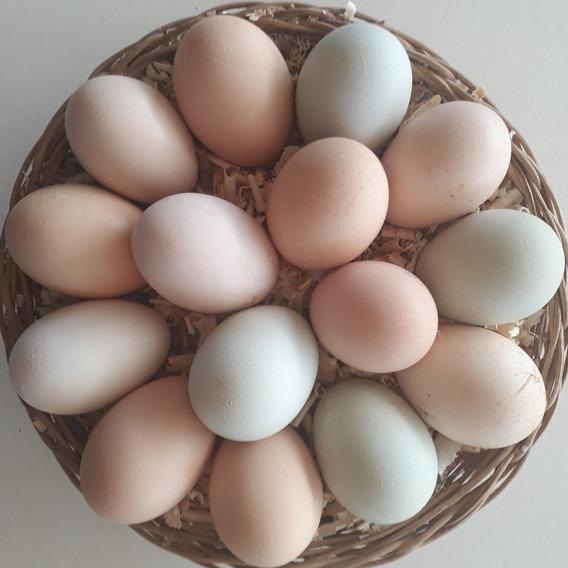 Ovos Galados De Índio Gigante - Kit Com 6 Ovos