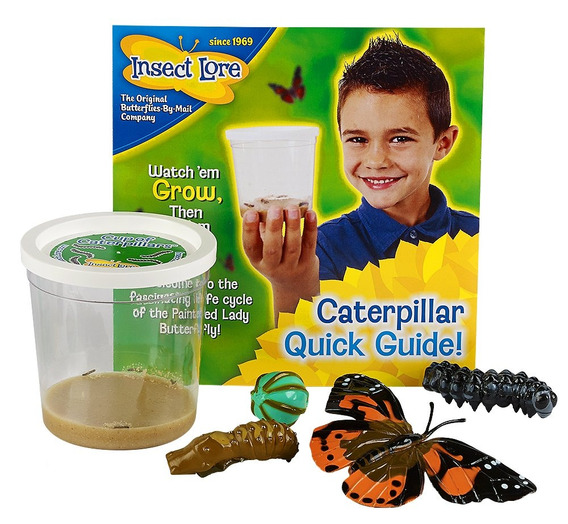 Insect Lore 5 Live Caterpillars - Copa De Caterpillars Bu