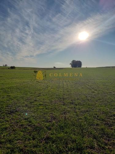 Campo En Rocha 76 - En Paraje Alferes - Coneat 132- Ref: 4702