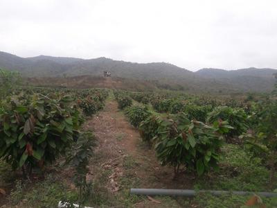 Se Vende Finca De 20 Hectareas En Santa Elena