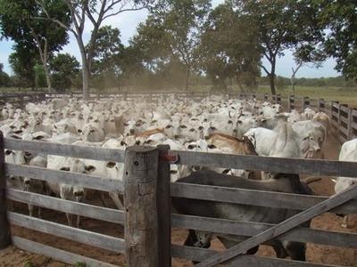 Fazenda A Venda Em Corumba - Ms (pecuária E Ecoturismo) - 252