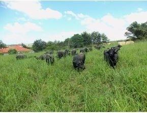Venda Fazenda Produtiva Regiao De Itaberá- Sp (4079)