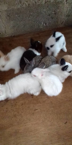 Imagen 1 de 3 de Manual Pdf Conejos Mini O Enanos
