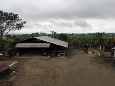Hacienda En Febres Cordero - Babahoyo 327 Hectareas
