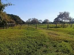 Fazenda A Venda Em Cristalândia - To (pecuária) - 874