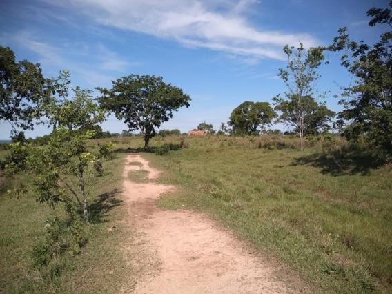Fazenda A Venda Em Camapuã - Ms (pecuária) - 1013