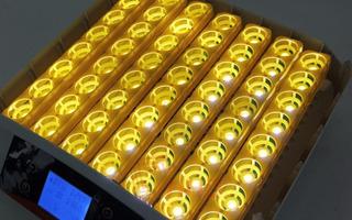 Incubadora De 56 Huevos Automatica Marca Hhd