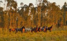 Pensionado De Caballos A Corral,a Campo Y Cabalgatas- Suarez