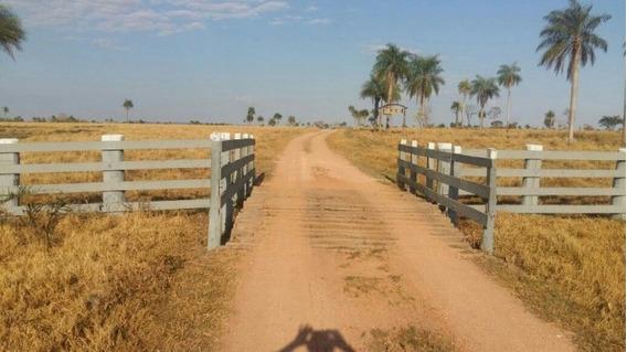 Fazenda A Venda Em Juti - Ms (pecuária) - 945